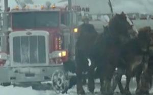 Cztery konie wystarczą, by wybawić Cię z kłopotu