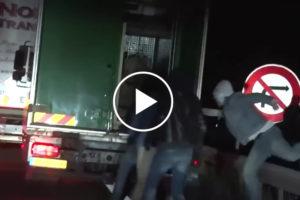 Imigranci ukryli się w pojeździe przewożącym… niedźwiedzia [FILM]