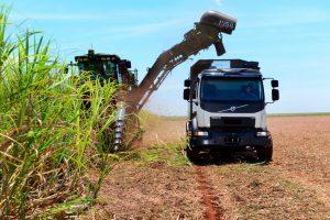 Automatycznie kierowany samochód Volvo zbiera trzcinę