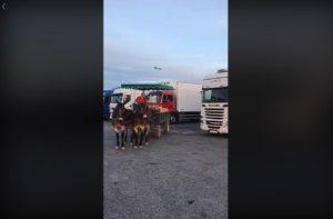 Osły uczą parkowania – film