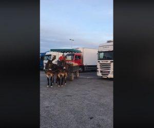 Osły uczą parkowania - film
