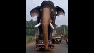 Słoń na drodze? Proszę bardzo – [film]