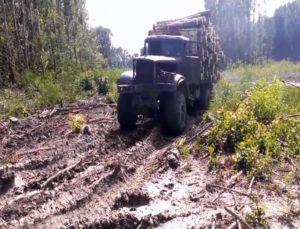 Off roadowy transport drewna [FILM]