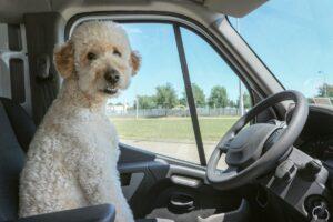 O psie, który jeździł w ciężarówce. Jak zawodowy kierowca może wyruszyć w trasę z pupilem?